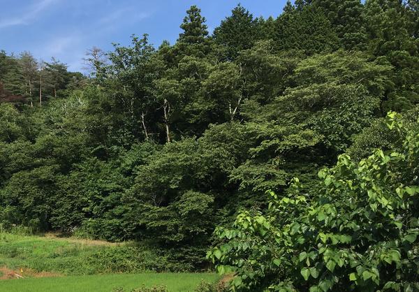 大籠 山の神(十二神)祠のあった森